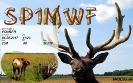 SP1MWF